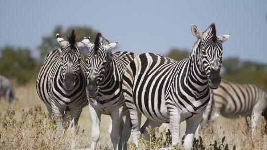 Les endroits les plus séduisants à explorer durant un séjour en Namibie