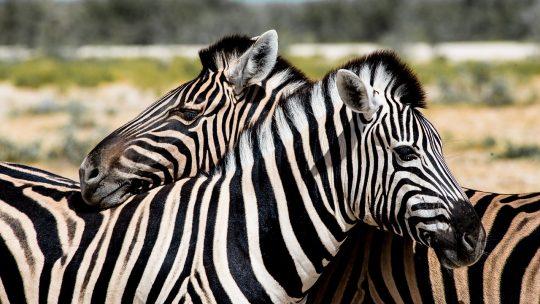 Visiter quelques parcs nationaux lors d'un voyage en Namibie